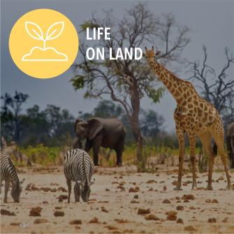 SDG Life on land