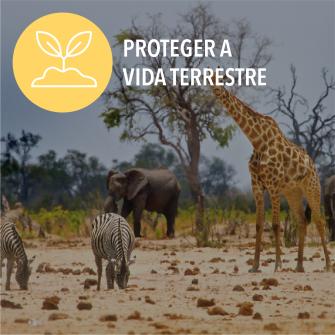 SDGs proteger a vida terrestre
