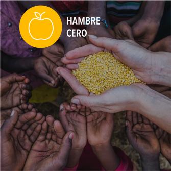 SDGs hambre cero