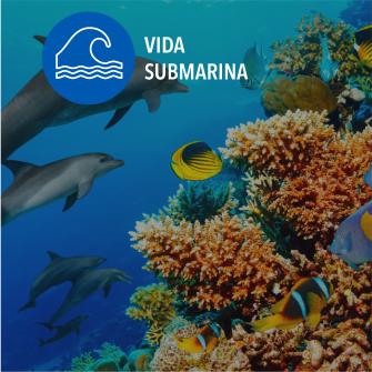 SDGs vida submarina
