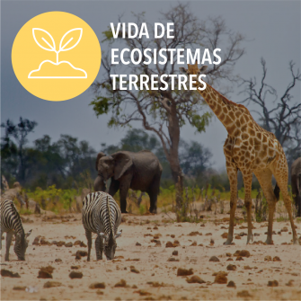 SDGs vida de ecosistemas terrestres
