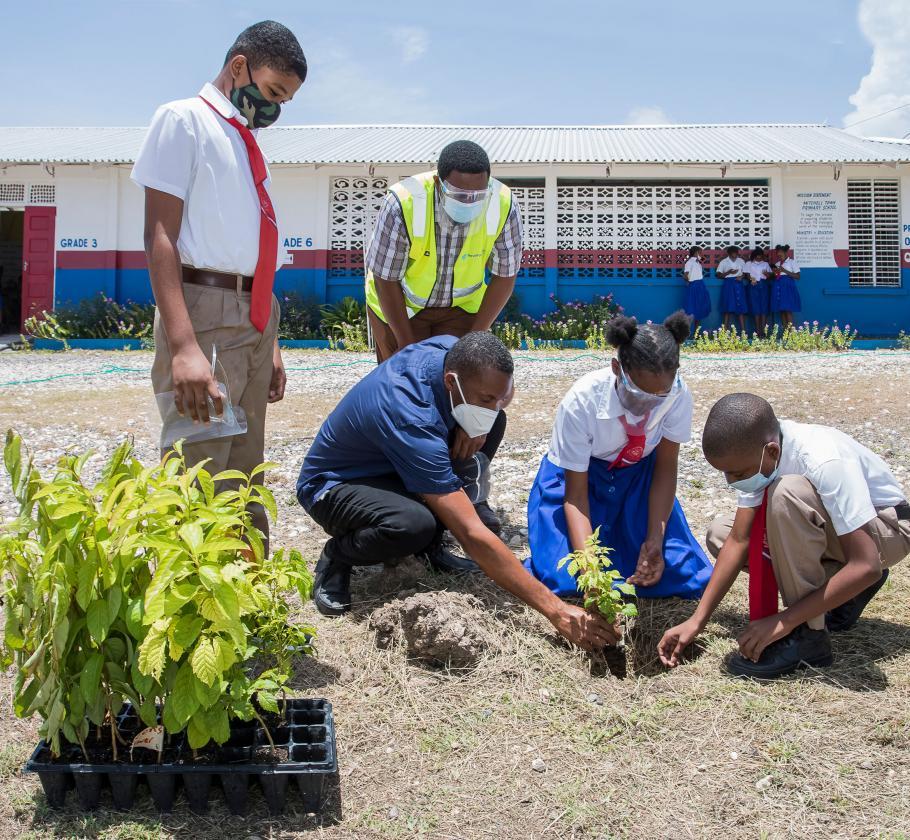 Jamaica tree planting